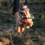 Spookie med viltspårsklöven