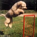 Milton hoppar högt